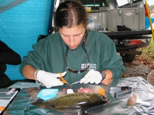 327_dissecting_fish