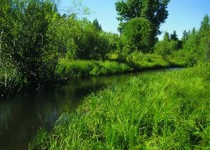 Riparian buffer photo credit:  USDA NRCS