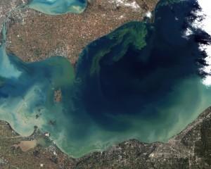 Algal bloom Lake Erie in 2011; NASA Earth Observatory